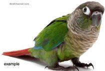 bird lost in Ile Bizard