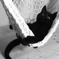 black cat vacay