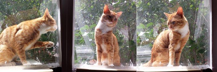 cat found in Île Bizard