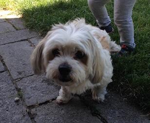 dog found in Pointe Claire