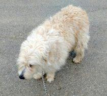 dog found in St-Norbert