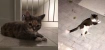 2 cats found in Villeray