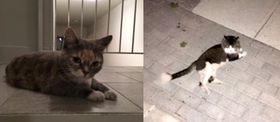2 cats found in Villeray