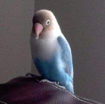 bird lost in Terrebonne