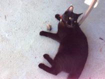 cat lost in Granby