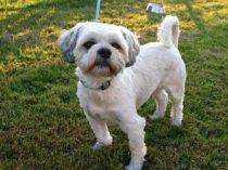 dog found Riviere Beaudette