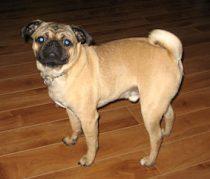 dog lost in Manseau