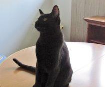 cat found in Dorion