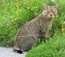 cat found Parc National