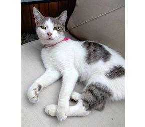 cat found in St-Henri