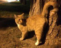 cat found in St-Léonard