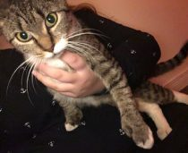cat found in Valleyfield
