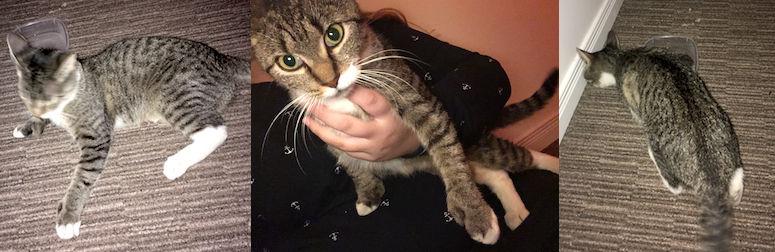 cat found in Valleyfield