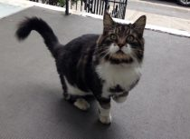 cat found in Villeray
