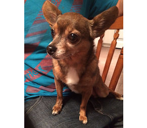 dog found in St-Canut