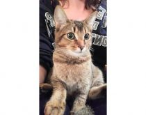 kitten found in Tetreaultville