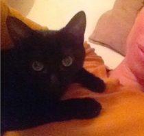 kitten lost in Hochelaga