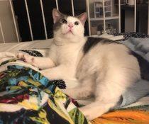 cat found in Mcgill-Ghetto