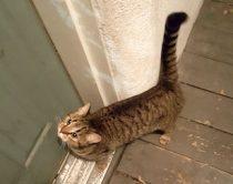 cat found in Mont-Rolland