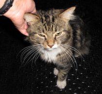 cat found in Parc-Ex