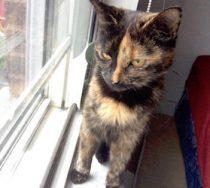 cat-found-rosemont-torti