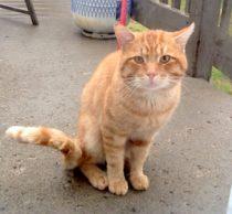 cat found St-Francois