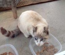 cat found in St-Mathias