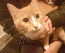 cat found in St-Michel
