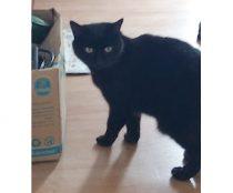 cat found in Ste-Agathe