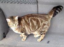 cat lost in Lakefield