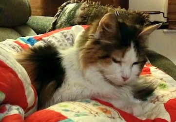 cat lost in Mont-Tremblant