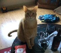 cat lost in St-Jean