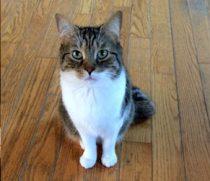 cat lost in St-Timothée