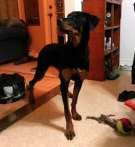 dog found in St-Jerome