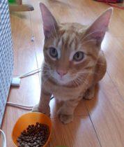 kitten found in Hochelaga