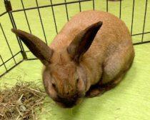 rabbit found in DDO