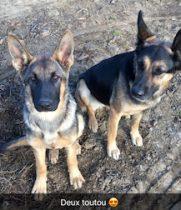 Stella and Nalla