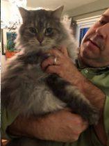 cat found in Deux-Montagnes