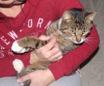 cat found in New Richmond