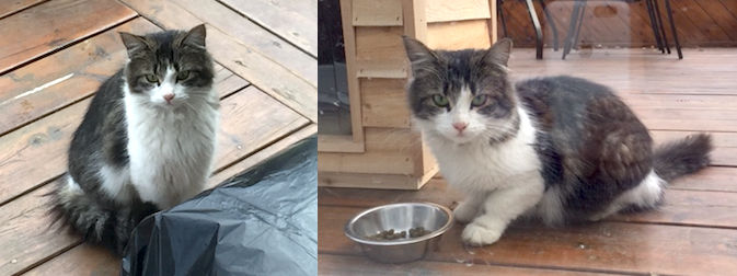cat found in Pierrefonds