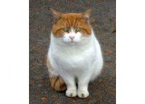 cat found in Repentigny