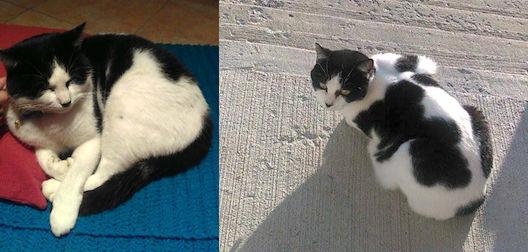 cat found in Ste-Julie