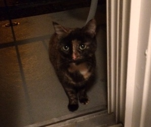cat found in Verdun