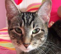 cat lost in Ste-Marthe