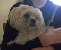 Small dog found in Hochelaga