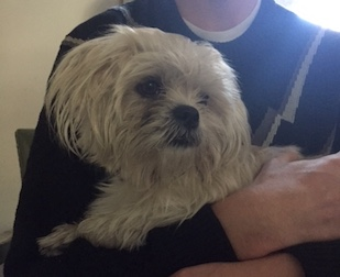 dog found in Hochelaga-wh