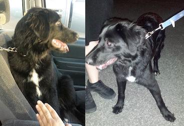 dog found in St-Eustache