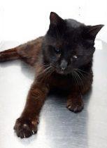 cat found in Lachute