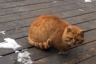 cat found in Oka