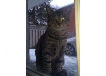 cat found in RDP